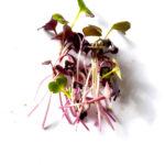 microgreens rambo