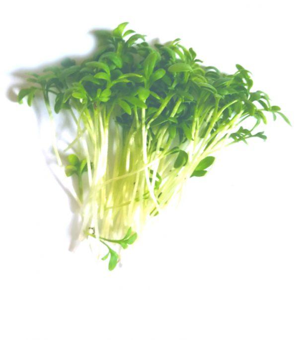 Tuinkers-microgreens